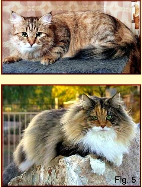 Cats showing two types of fur